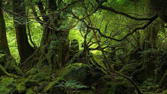 壁纸 风景 森林 植物 桌面 蕨类 587_332